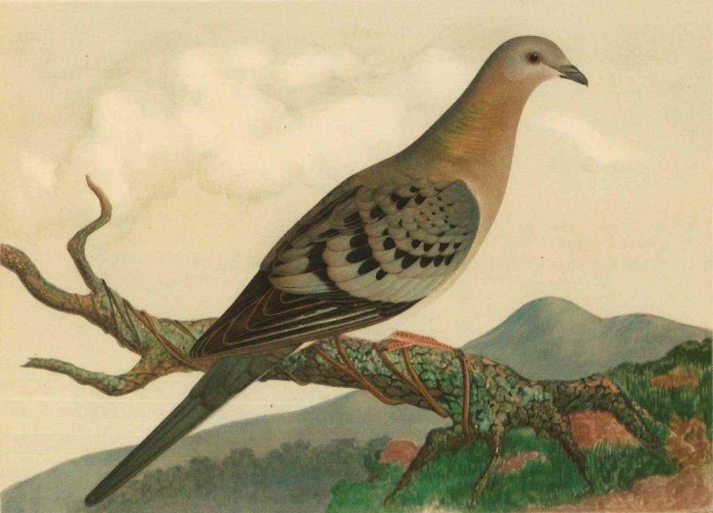 исчезнувшие животные и птицы в картинках значения