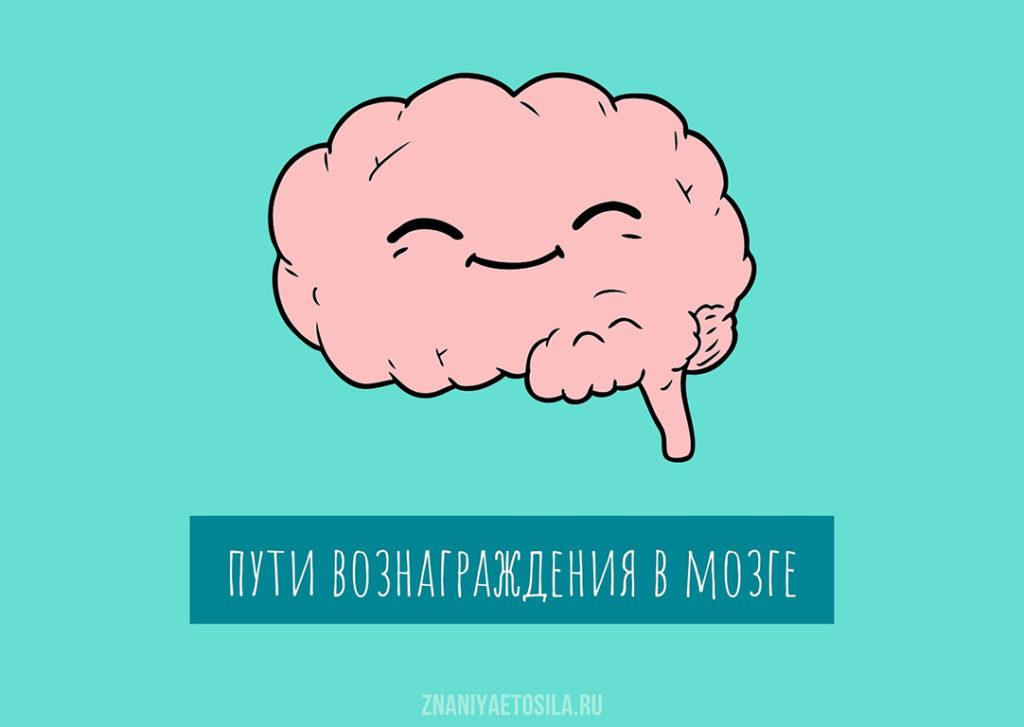 Никотин активирует пути вознаграждения в мозге