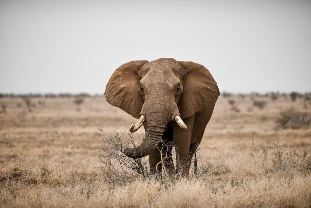 Миф № 4: Слоны боятся мышей