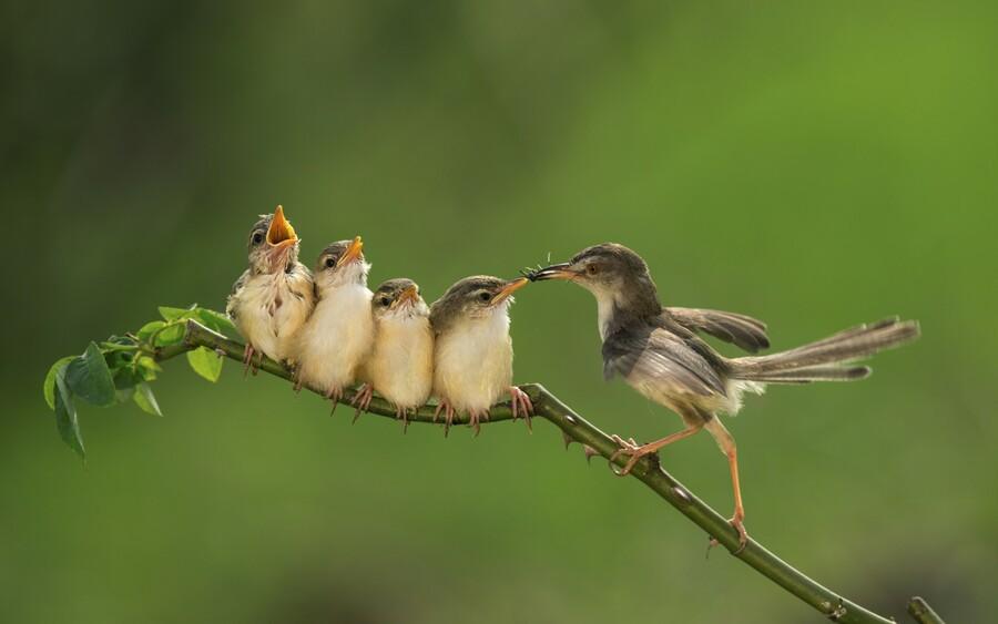 Миф № 8: Птицы откажутся от птенцов, если до них дотронется человек