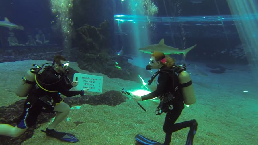 Джошуа Хед сделал романтическое предложение руки и сердца своей девушке в океанариуме с акулами