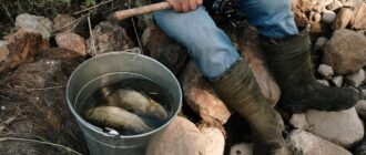 Почему рыбалка полезная для здоровья